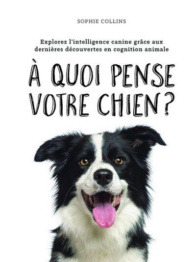 À quoi pense votre chien?
